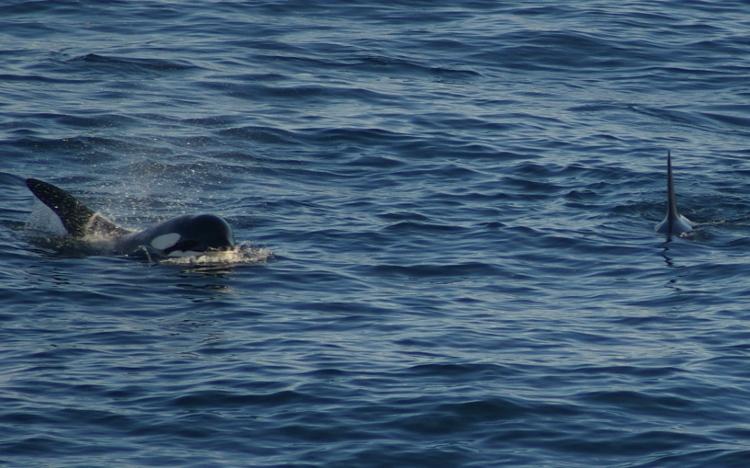 Fotoalbum ijsland van berts camera orka