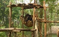 Kuang Si: bear rescue centre