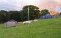 Llanberis Mountain Farm Campsite